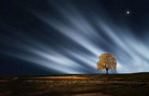 Umwelt-Baum-Sterne-Hautec